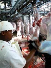 foodfoam reinigt in de levensmiddelenindustrie